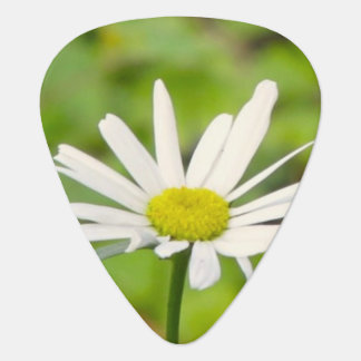 Daisy Guitar Pick
