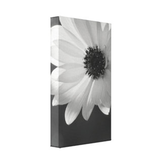 Daisy in Black and White Gallery Wrap Canvas