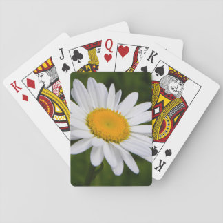 Daisy in Bloom Playing Cards
