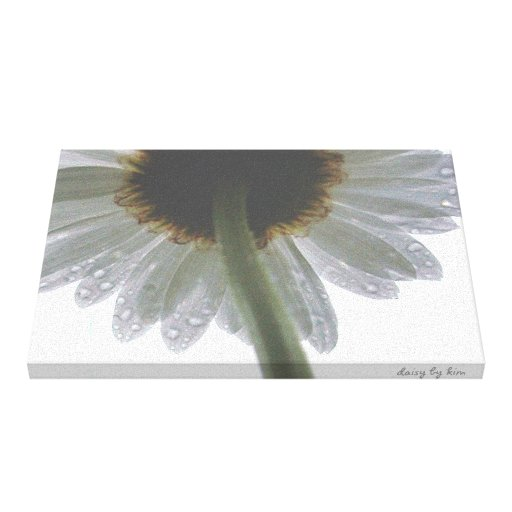 Daisy in the Rain Gallery Wrapped Canvas