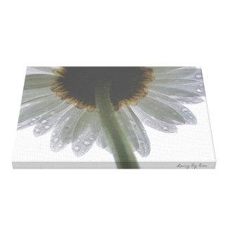 Daisy in the Rain Stretched Canvas Print