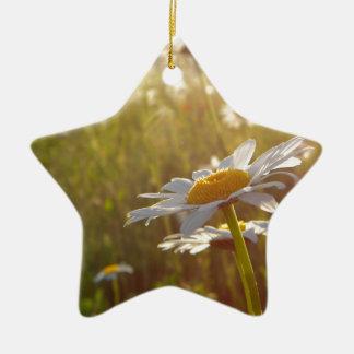 Daisy Lights Ceramic Star Decoration