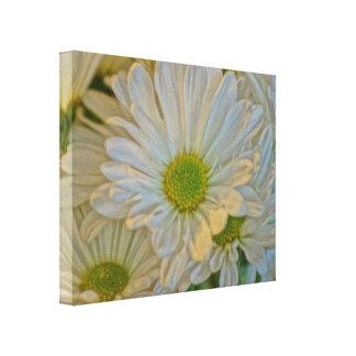 Daisy Love Gallery Wrap Canvas