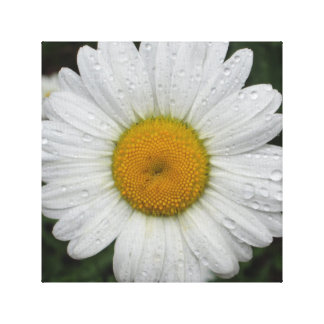Daisy May Queen Water Canvas Print