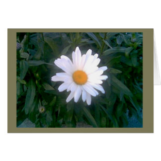Daisy Note Cards