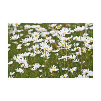 Daisy on a meadow canvas print