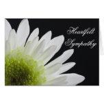Daisy on Black Sympathy Greeting Card