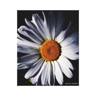 Daisy on canvas.. gallery wrap canvas