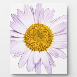 daisy plaque