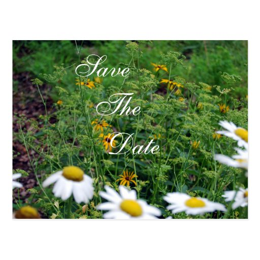 Daisy Save the Date Postcard