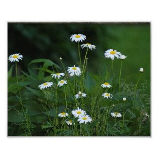 Daisy Smiles 10 x 8 Photographic Print
