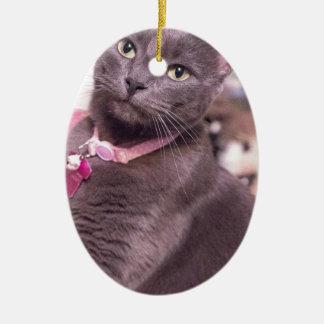 Daisy the Cat Ceramic Oval Decoration