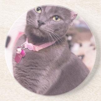 Daisy the Cat Coaster