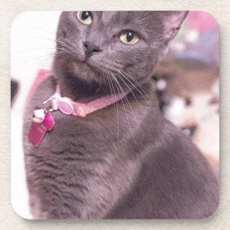Daisy the Cat Coasters