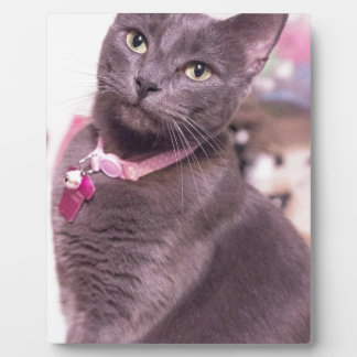 Daisy the Cat Plaque