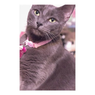 Daisy the Cat Stationery
