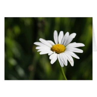 Daisy - Thinking of You Greeting Card