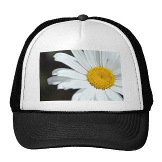 Daisy Up Close Hat