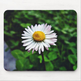 Daisy White Flower Mousepads