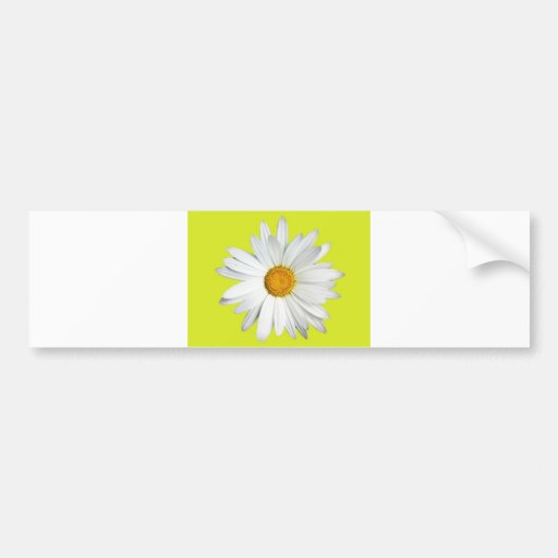 Daisy with Lime Green Background Bumper Stickers