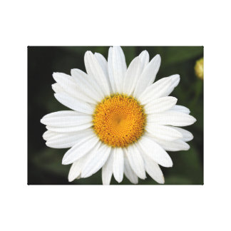 Daisy Wrapped Canvas