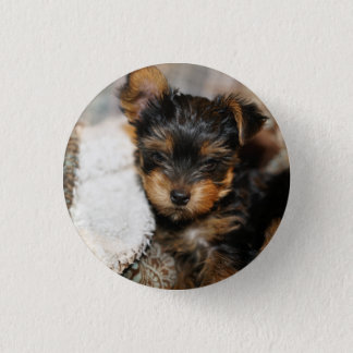 Daisy Yorke Pup, Small, 1¼ Inch Round Button