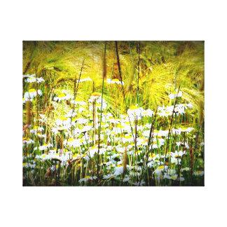 Daisy's Canvas Prints