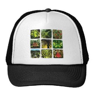 Dali Plants Hats