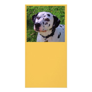 Dalmatian Customised Photo Card