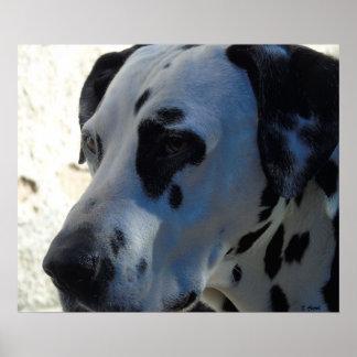 """Dalmatian Dog 24"""" x 20"""", Value Poster Paper"""