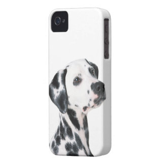 Dalmatian dog beautiful photo, gift iPhone 4 Case-Mate case