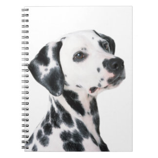 Dalmatian dog beautiful photo, gift notebook