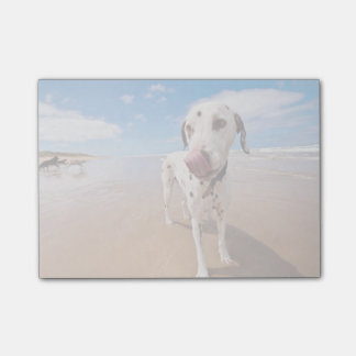 Dalmatian Dog On Beach Post-it Notes