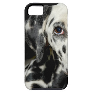 Dalmatian dog, pretty lookking iPhone 5 cover