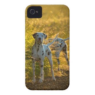 Dalmatian Dogs Blackberry Case