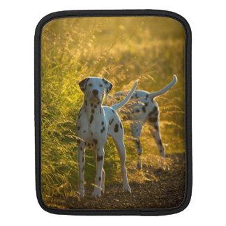 Dalmatian Dogs iPad Sleeve