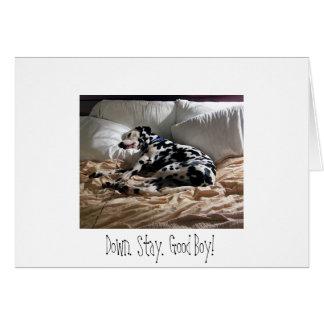 Dalmatian.  Down.  Stay.  Good Boy! Card