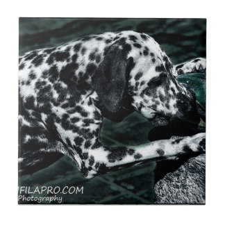 Dalmatian god dog ceramic tile
