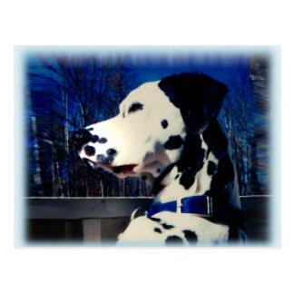"""Dalmatian """"Kelso"""" ~ Postcard"""