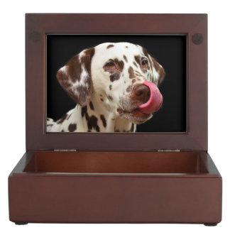 Dalmatian licking keepsake box
