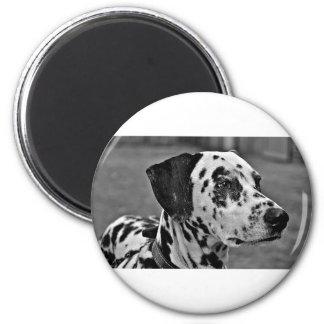 Dalmatian Pet Dog Magnet