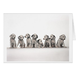 Dalmatian Puppies Card