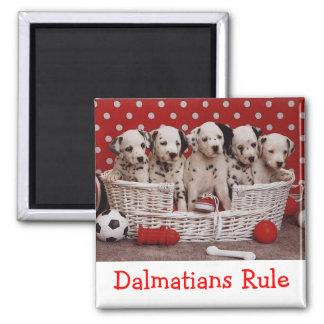 Dalmatian Puppy Dog  - Black and White Spots Square Magnet
