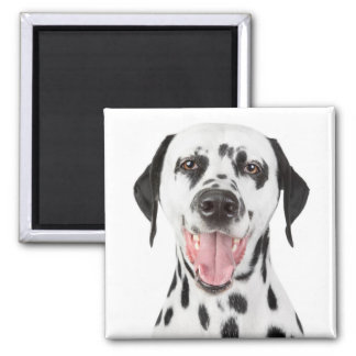 Dalmatian Puppy Dog - Black & White Spots Fire Dog Magnet