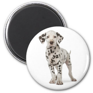 Dalmatian Puppy Dog - Black & White Spotted Pup 6 Cm Round Magnet