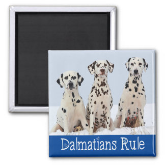 Dalmatian Puppy Dog - Black & White Spotted Pups Magnet