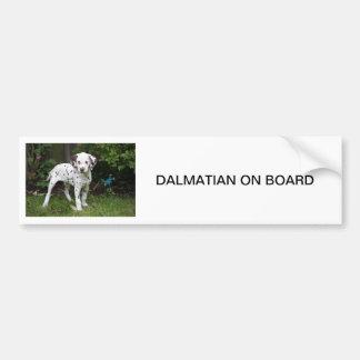 Dalmatian puppy dog, BUMPER STICKER
