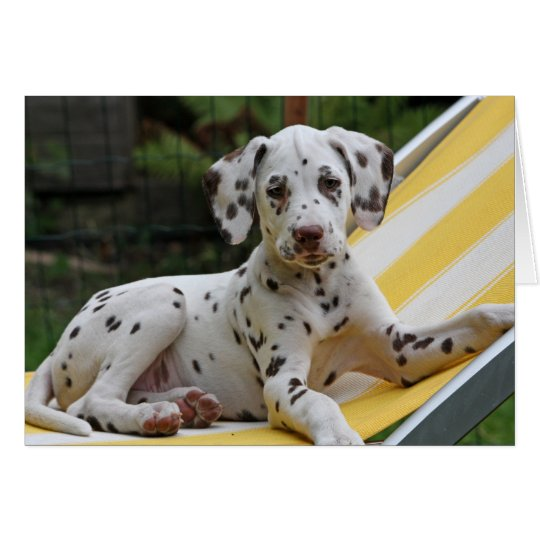 Dalmatian puppy dog greeting card