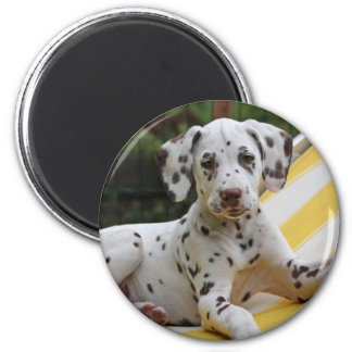 Dalmatian puppy dog magnet, gift idea magnet