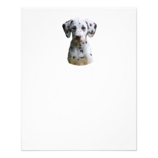 Dalmatian puppy dog photo full color flyer